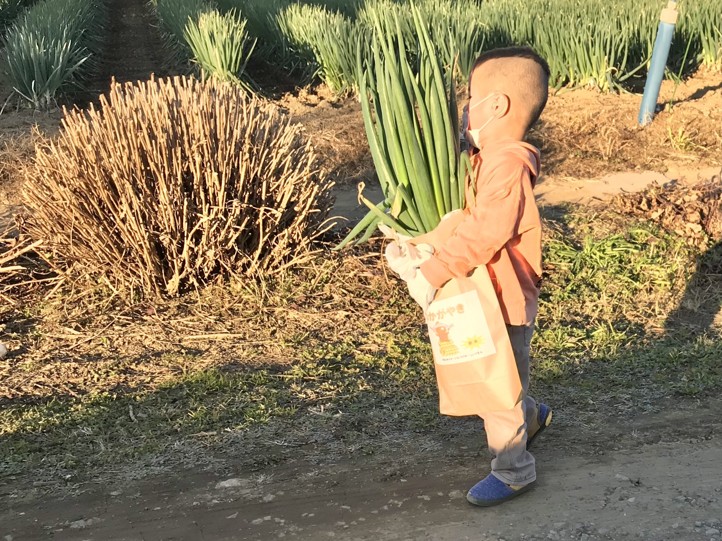 収穫体験2019